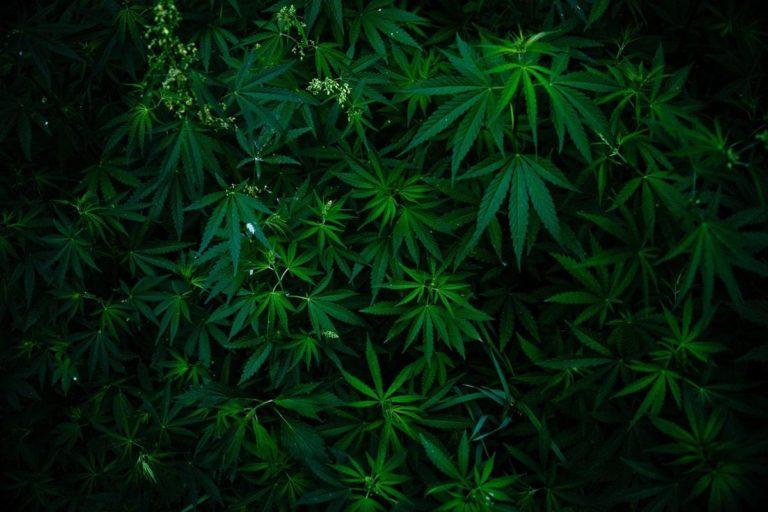 Rodzaje akcesoriów do uprawy marihuany